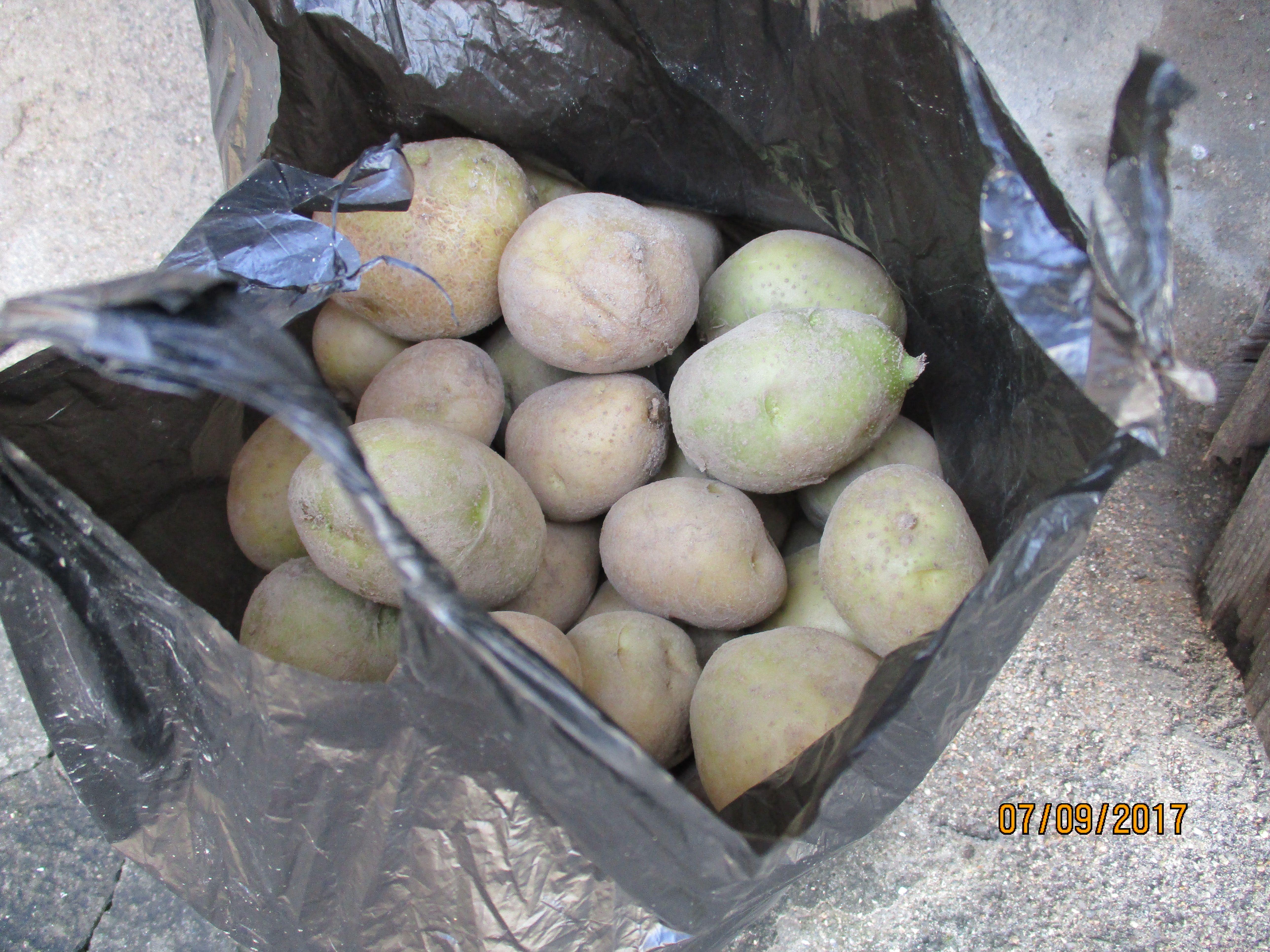 potato (potatoes)