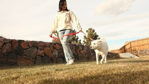 For The Best Dog Trainers Baton Rouge Louisiana Call Off Leash