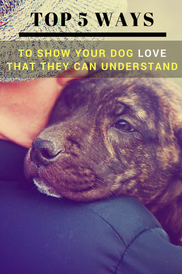 6 Ways To Show Your Dog Love That They Can Understand Dog Love