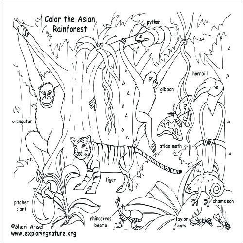 Nice Animal Habitat Coloring Pages For Your With Desert
