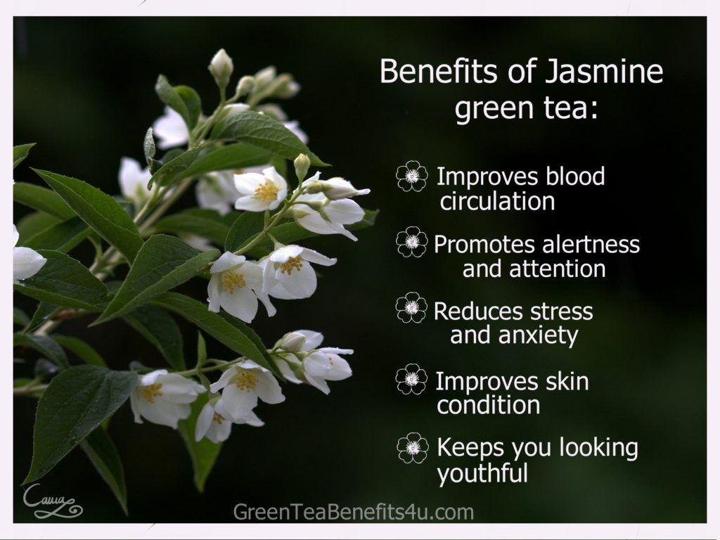 jasmine green tea benefits #greentea #tea #healthy #drinks