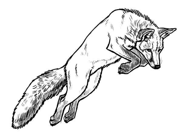 Jumping Kit Fox Coloring Pages Download Print Online Coloring