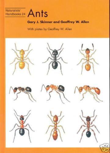 livre anglais sur l 39 identification des fourmis ainsi que. Black Bedroom Furniture Sets. Home Design Ideas