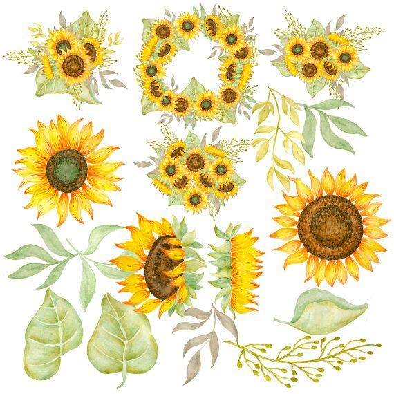Sunflower wedding. Clipart watercolor sunflowers hand