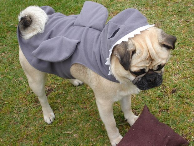 Chomp Chomp Pug Dog Shark Halloween Costume Cute Funny