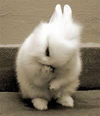 """Результат пошуку зображень за запитом """"спокойной ночи кролик"""""""