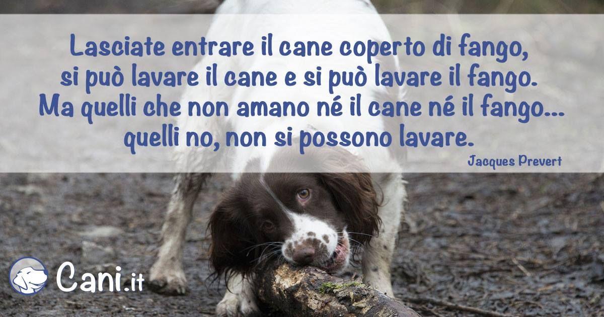 Bagno Cane ~ Lasciate entrare il cane coperto di fango si può lavare il cane e