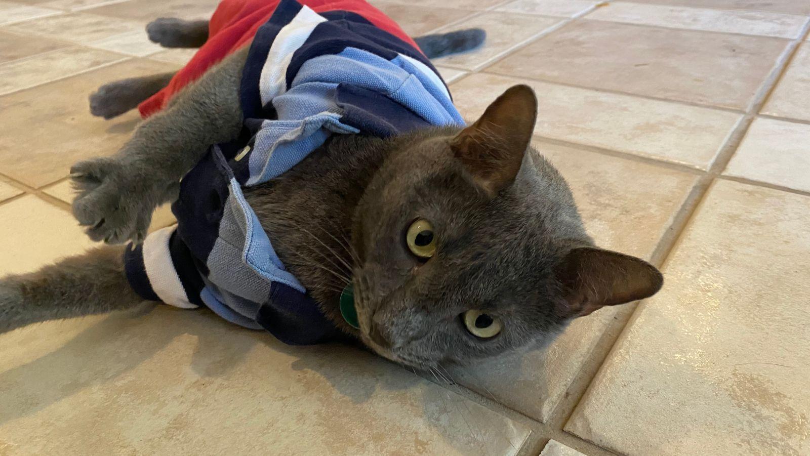 Pin On Cat Comfort