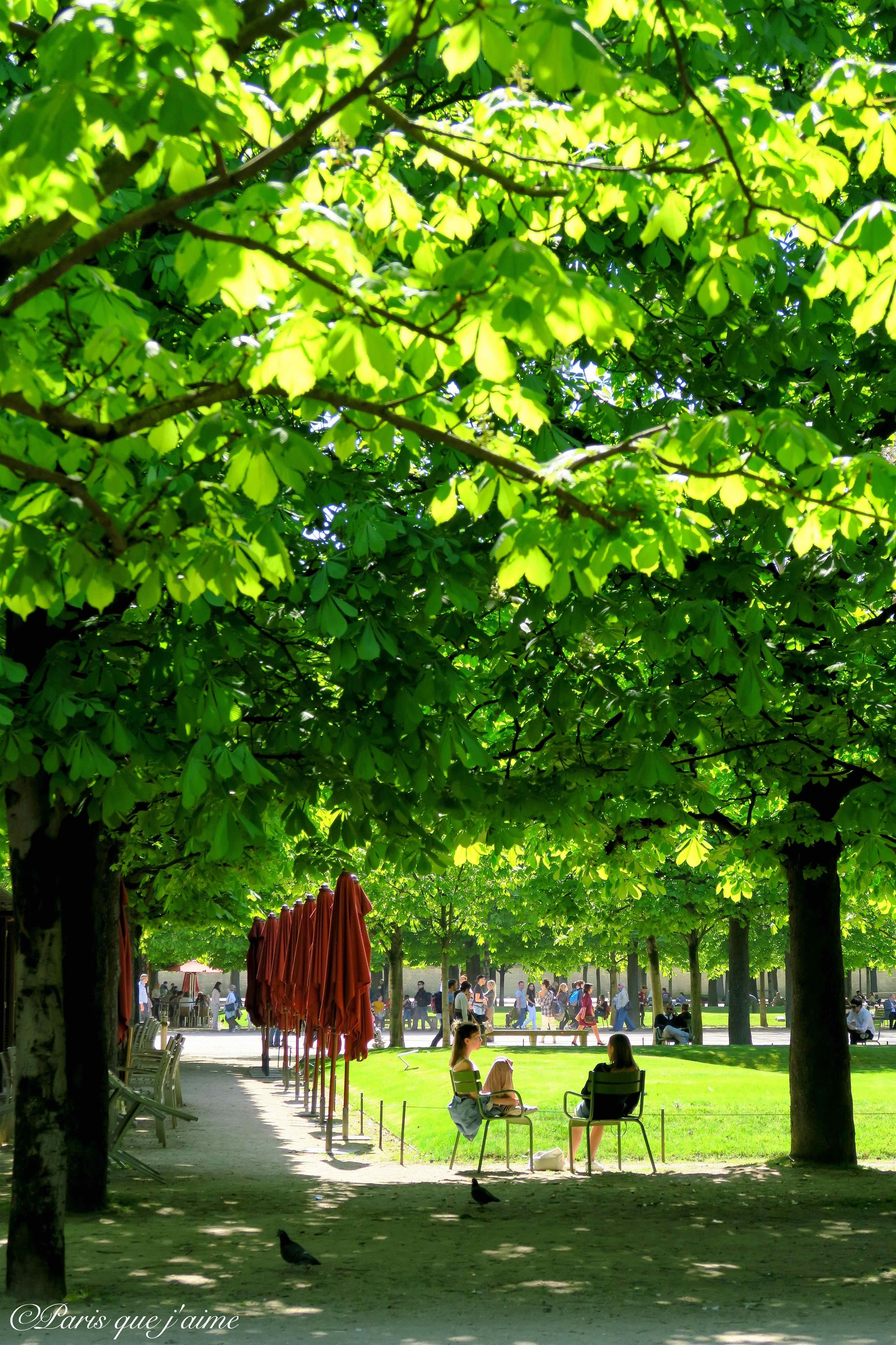 #Paris, Jardin des #Tuileries   Paris visite, Paris, Louvre paris