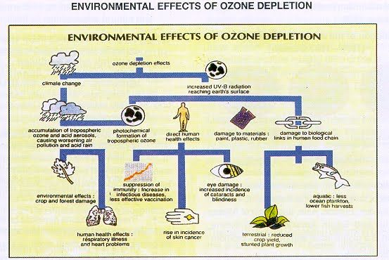 This Picture Shows The Effects Of The Loss Of Ozone  Ozone  This Picture Shows The Effects Of The Loss Of Ozone
