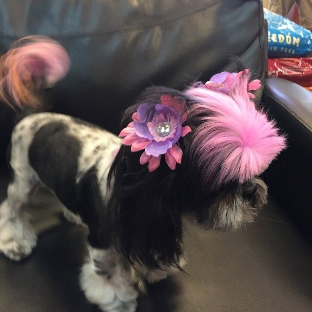 22 Of The Fiercest Dog Hairstyles On The Dog hair