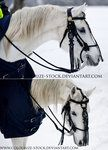 Hungarian bridle