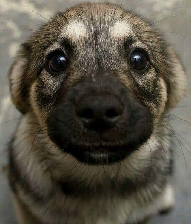 Talk About Puppy Dog Eyes Danielle Pinterest Puppy Dog Eyes