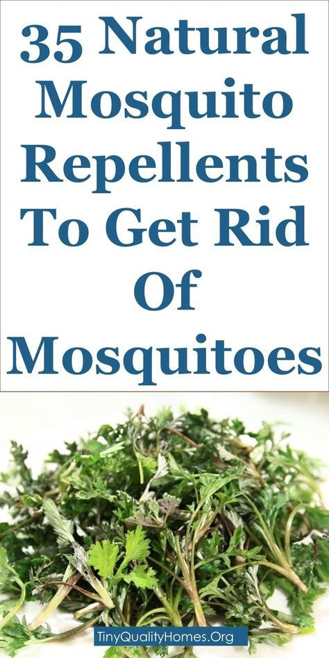 35 Natural Mosquito Repellents To Get Rid Of Mosquitoes