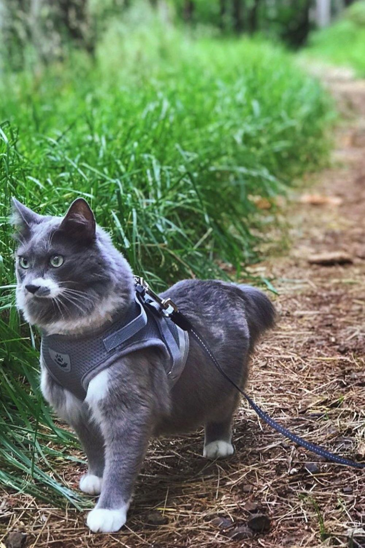 The True Adventurer Reflective Cat Kitten Harness And Leash Set For Adventure Cats Adventure Cat Cat Leash Cat Training