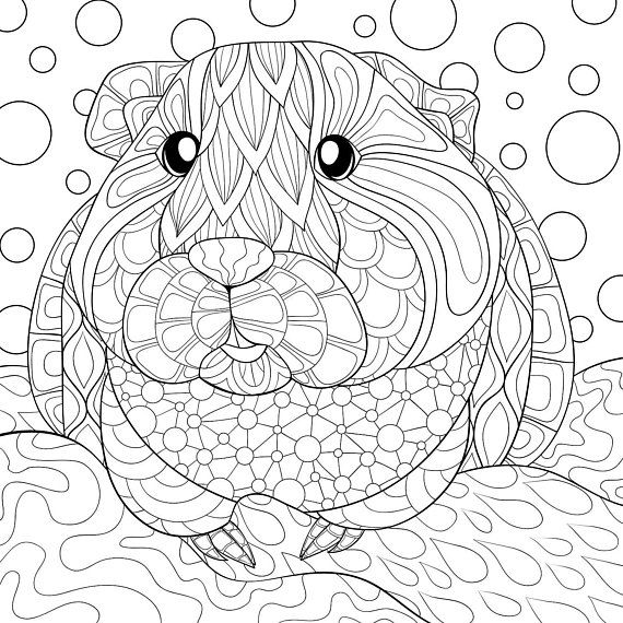 Guinea pig adult coloring page book zen tangle illustration | fun ...