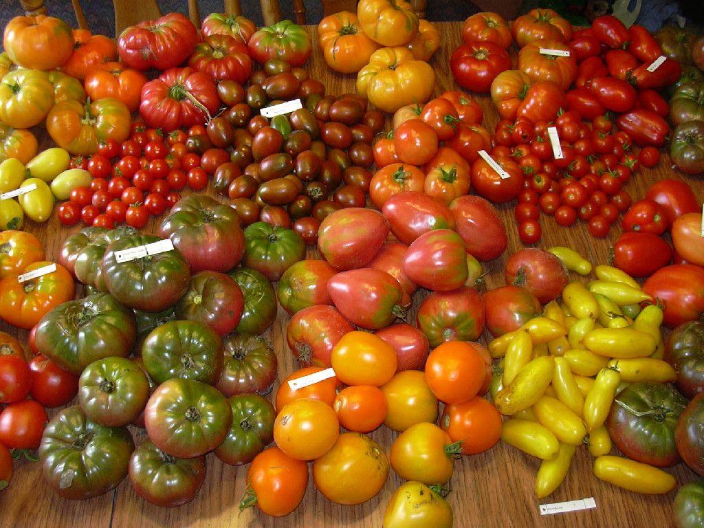 Tomato Bob Over 700 Varieties Of Heirloom Tomato Hot 400 x 300
