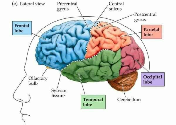 Pin de Amy Anderson en Brain & behaviour | Pinterest
