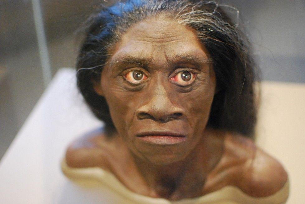 Homo floresiensis facial recreation