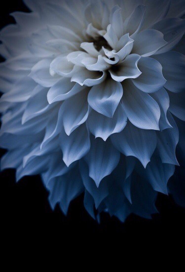 Mmmmmm Floral Dreams Pinterest Flowers Dahlia And Beautiful