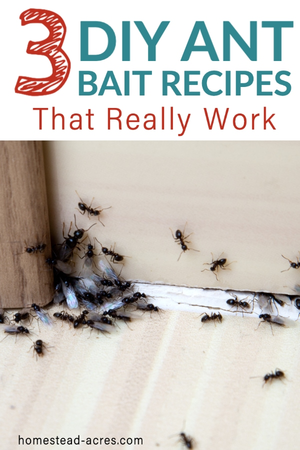 How To Get Rid Of Ants With Borax In 2020 Get Rid Of Ants Black Ants Rid Of Ants