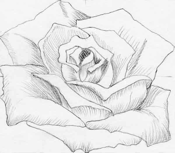 Cmo lograr dibujos de flores en forma sencilla y con