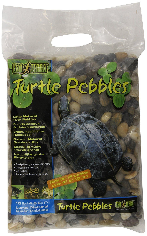 Turtles natural habitat turtle todous pinterest turtle and
