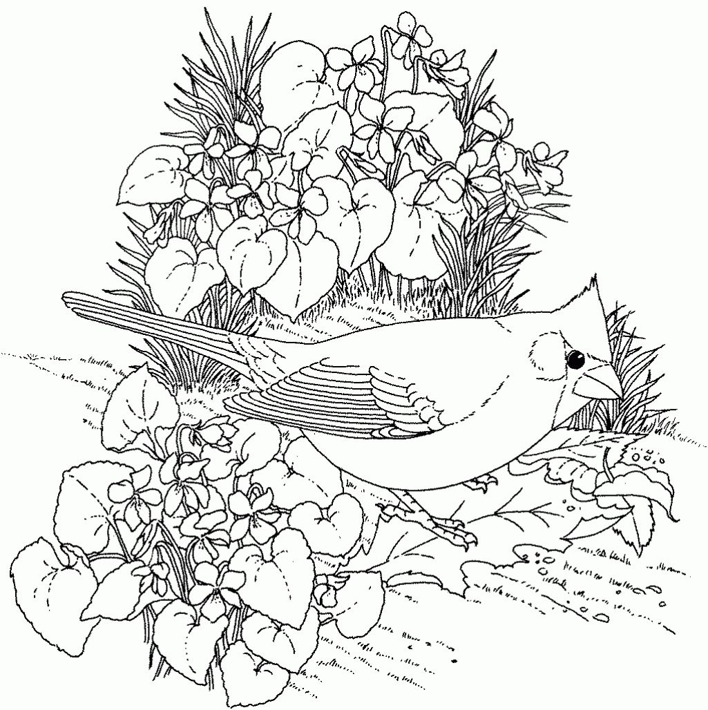Pin By Jenny On Drawings To Color Hard Vs Bird Coloring Pages