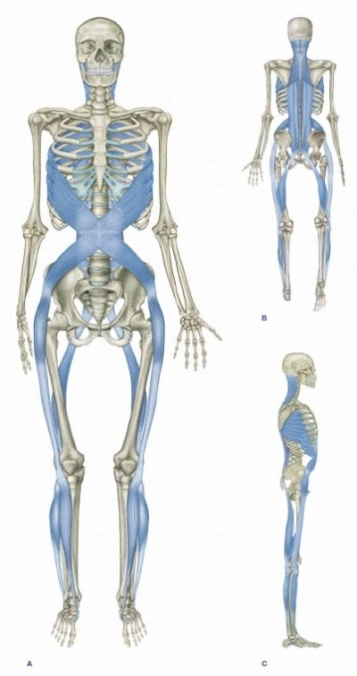 Myofascial Chain: Line Spiral. These are the exact area that are ...