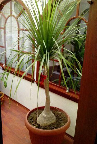 Plantas de sombra Ideales para interiores Deco\Home Pinterest