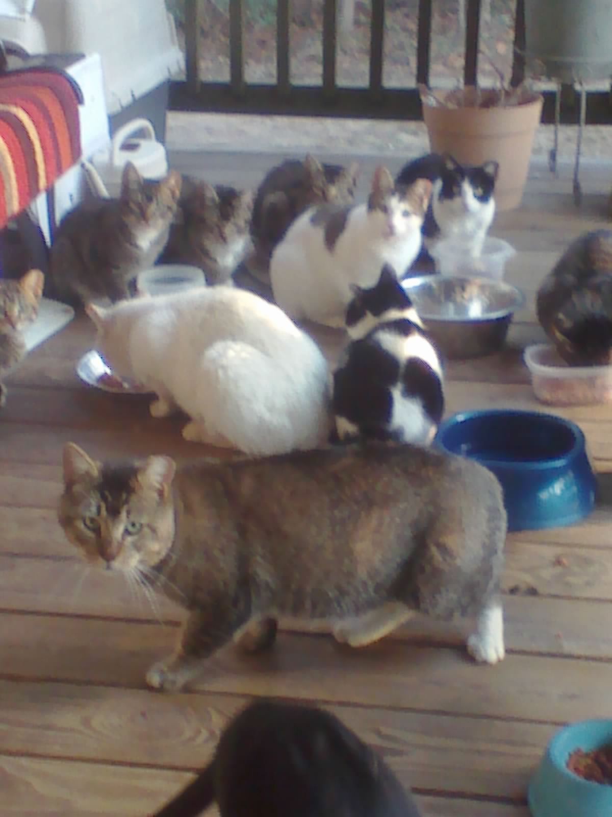 Some Of My Feral Cats That Have Been Spayed Neutered After They Adopted Me Tnr Dog Care Feral Cats Cats And Kittens