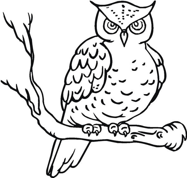 Owl Yawn Coloring Page Download Print Online Coloring Pages For Free Color Nimbus Owl Coloring Pages Online Coloring Pages Coloring Pages