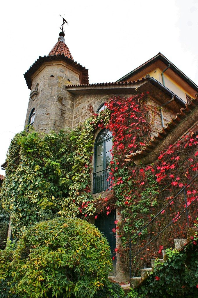 Parthenocissus on a European building in 2020 Beautiful