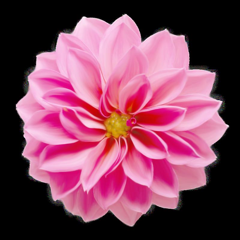 romantic_illusion_molemina_el (20).png   Collage   Flowers ...