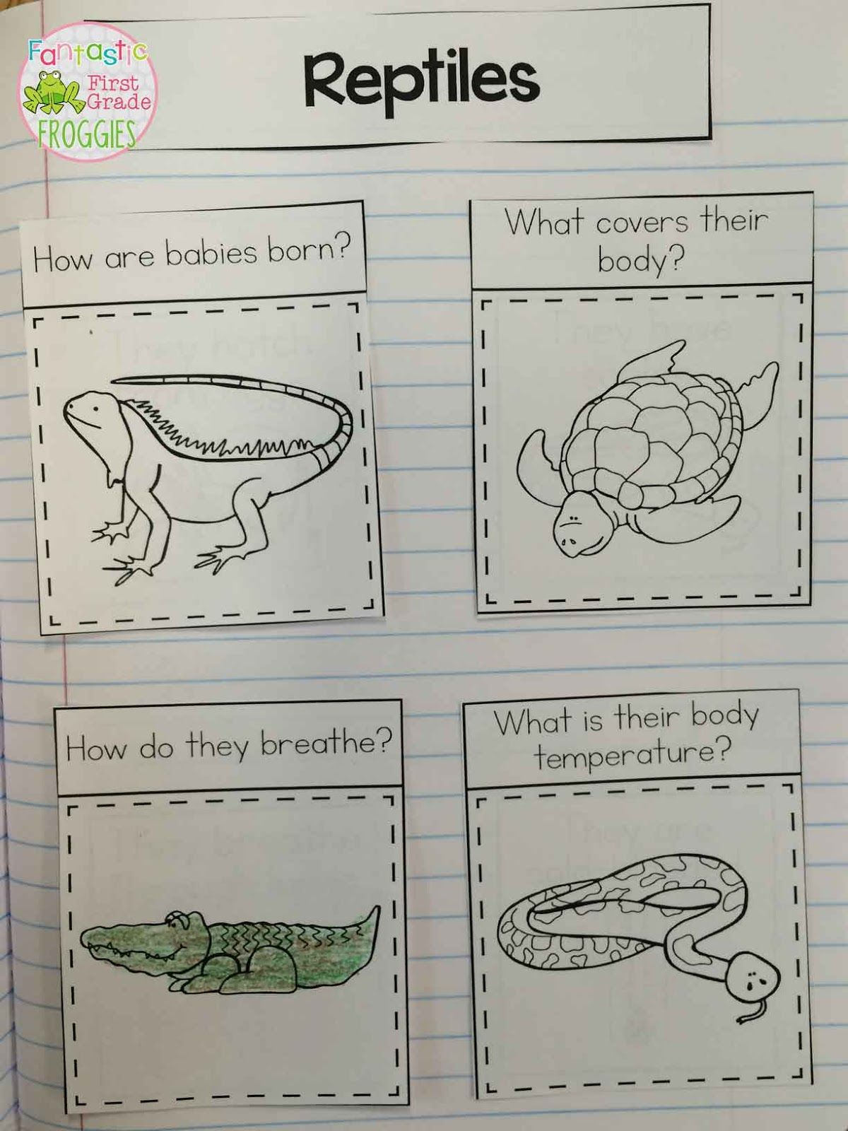 We Spent The Last Two Weeks Learning About Animal Classification This All Came About Last Year
