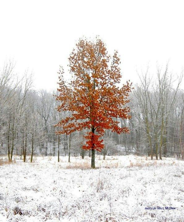 Talltree arboretum  Valpo IN.