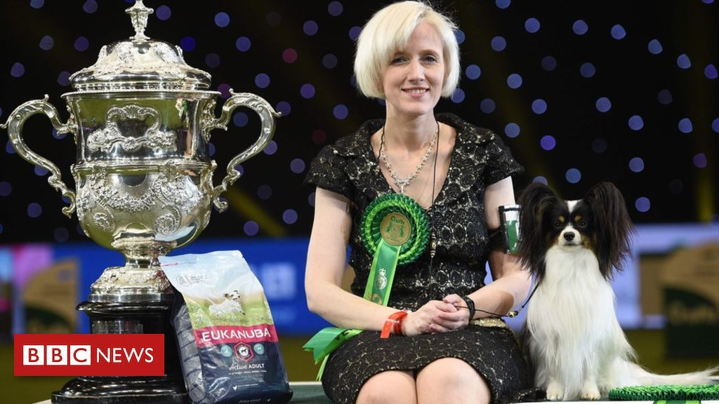 Dylan Crowned Best In Show At Crufts Irish Water Spaniel Buy A