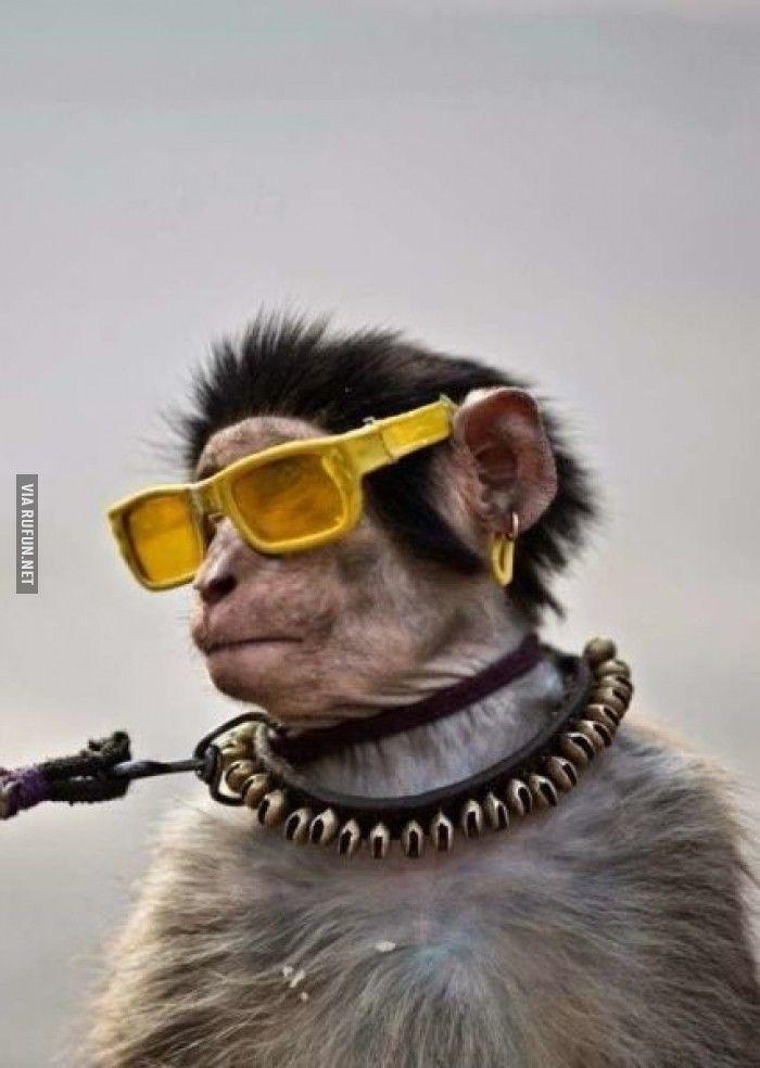 Смешные картинки обезьянок в очках, открытки день