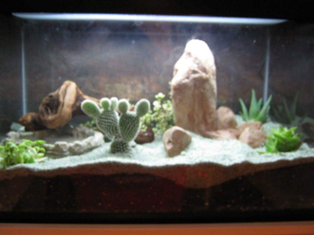 20 gallon desert vivarium leopard gecko reptile habitats pinterest vivarium geckos and. Black Bedroom Furniture Sets. Home Design Ideas