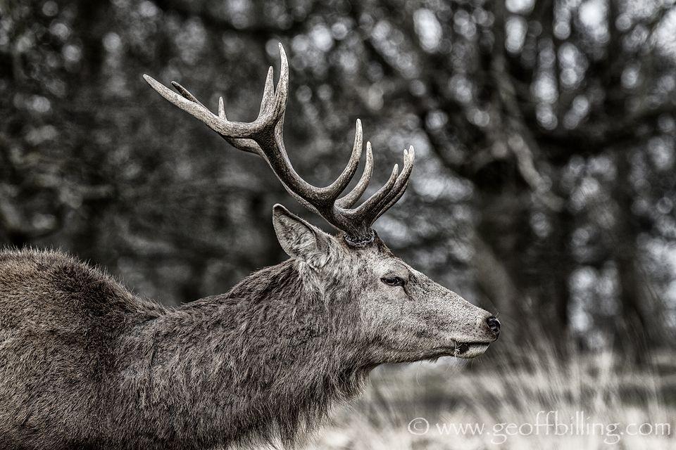 Richmond Park, London Richmond Park Deer London