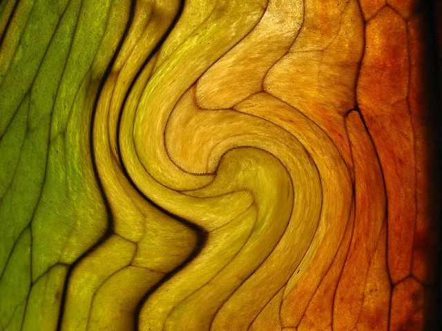 ~~ leaf whirl ~~