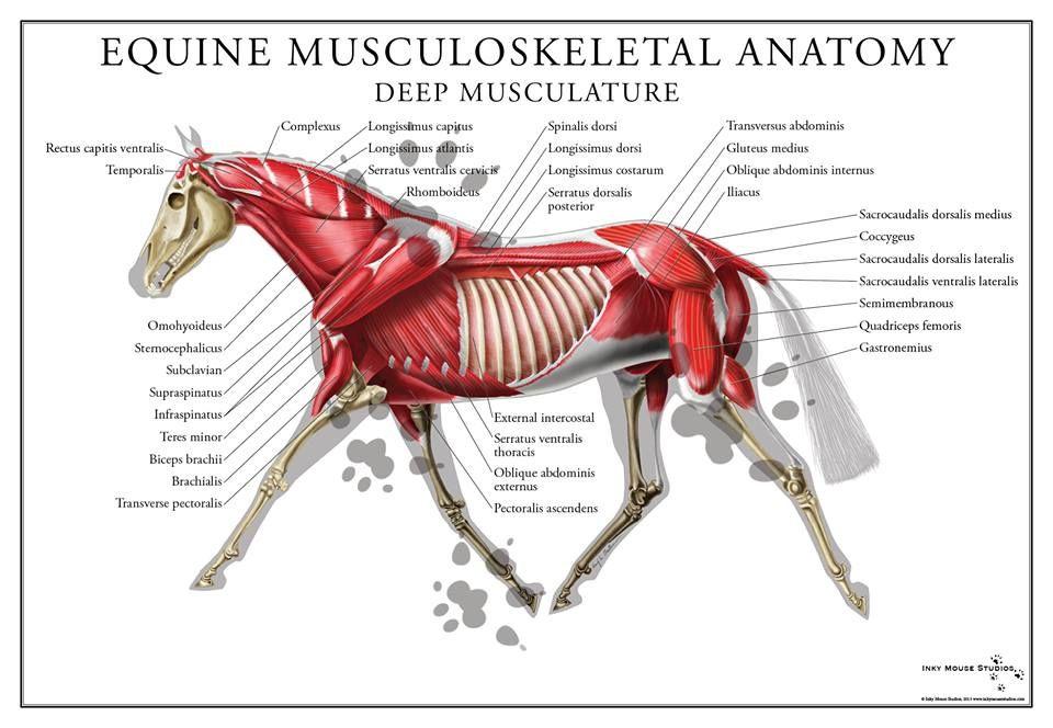 Pin von Kaylie Lively auf Equestrian | Pinterest