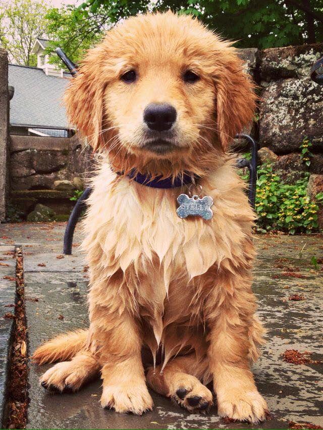 Wet Puppy Puppy Love Pinterest Perros Bonitos Animales