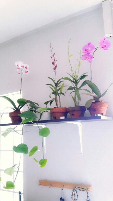 Orchids and green pothos