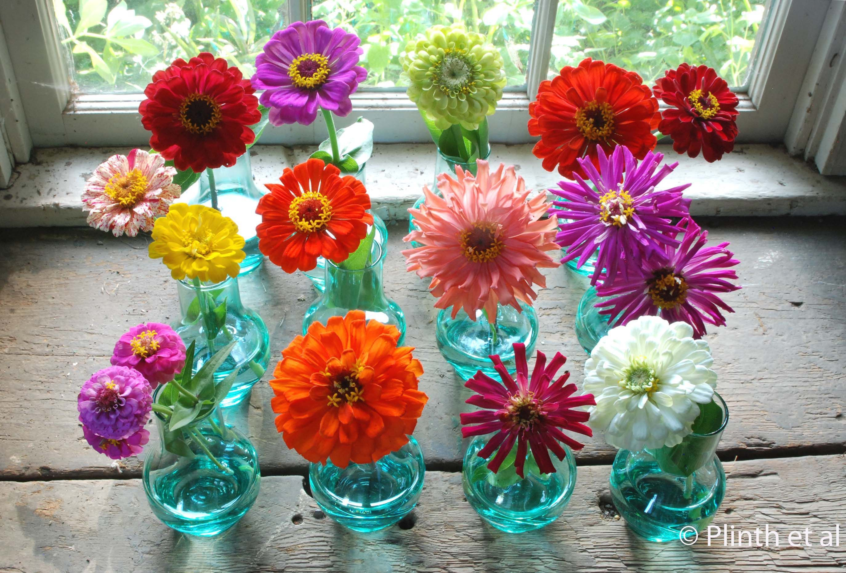 Zinnia Flower Coloring Page With Science 26 Nature Pinterest ...