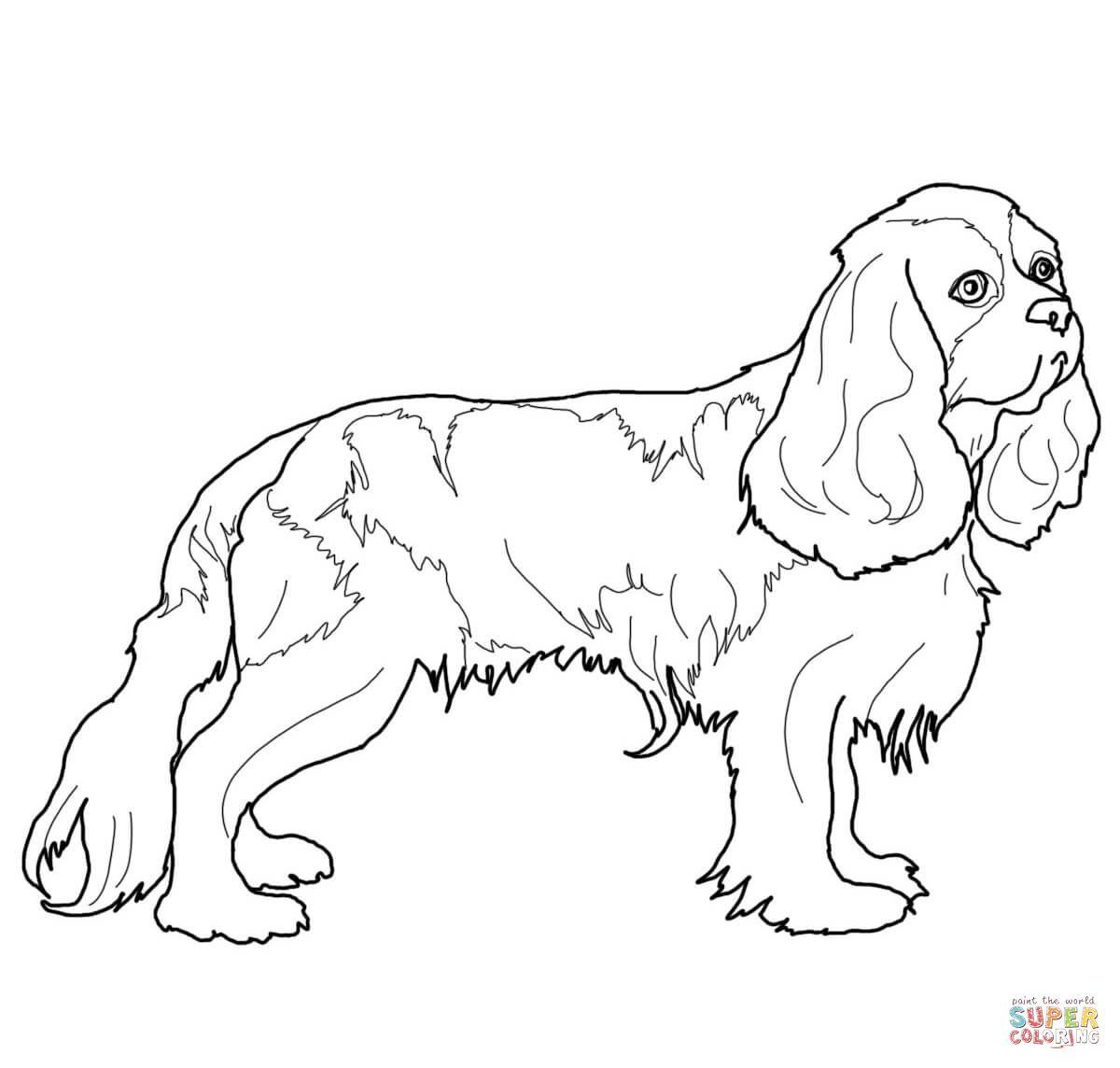 Cavalier King Charles Spaniel Hond Tekeningen Cavalier King Charles Honden