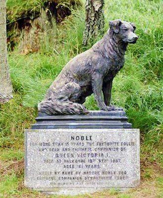 Queen Victoria S Border Collies Collie Dog Collie Border Collie Dog