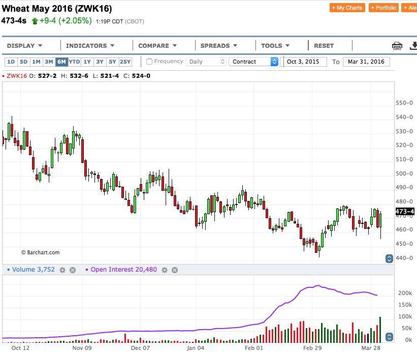 Corn futures in Crash: il Planting Intention Report affonda i prezzi - Materie Prime - Commoditiestrading