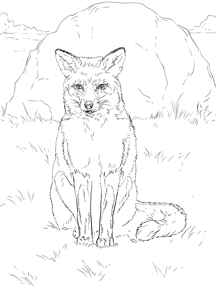 Realistic Fox Coloring Pages Fox Coloring Page Horse Coloring Pages Animal Coloring Pages