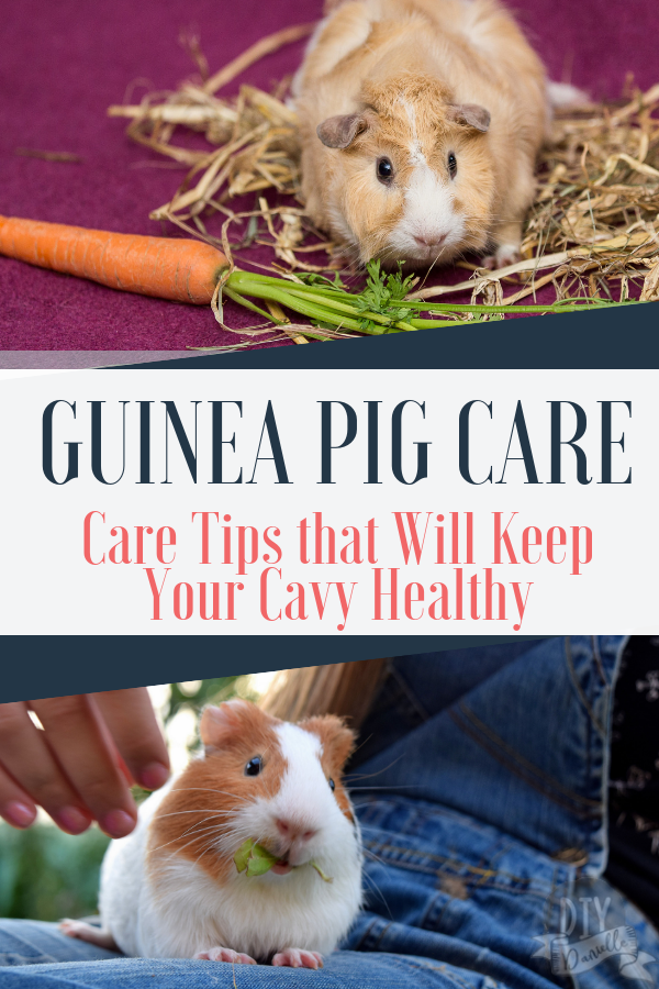 Pin On Crafts Care For Pets